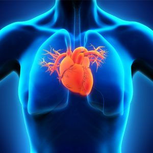 Magnetkameraundersökning hjärta